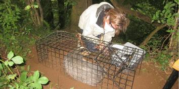 2014-Badger-Vaccination-Update